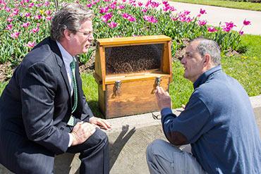 VIDEO: Pollinators